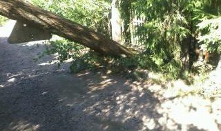 деревья 28.08 поваленные 004